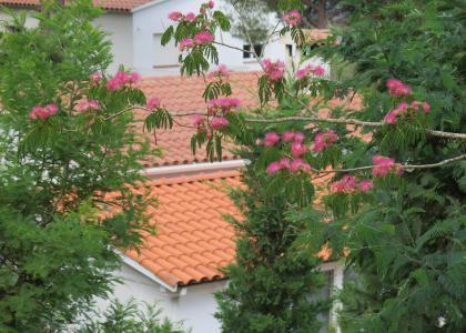 Arboles especiales para jardines a medida