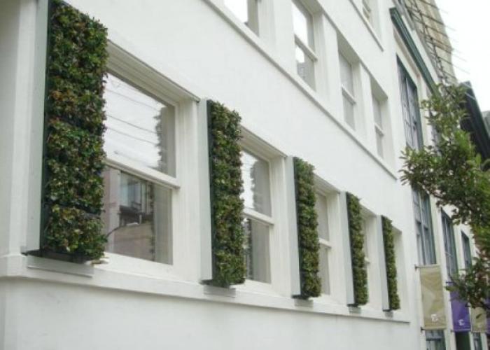 Porticones contraventanas verdes plantas jardin