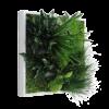 cuadro vegetal cuadro verde